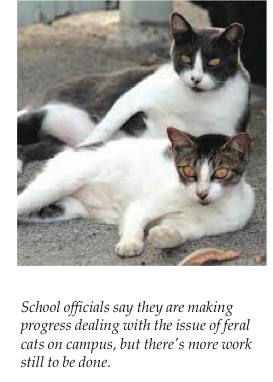 Cats on campus