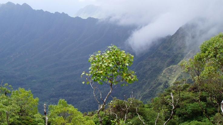 kaala_cloud_forest.jpg