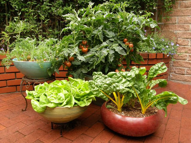 Container-Vegetable-garden.jpg