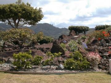 halawa-xeriscape-garden-landscaping.jpg